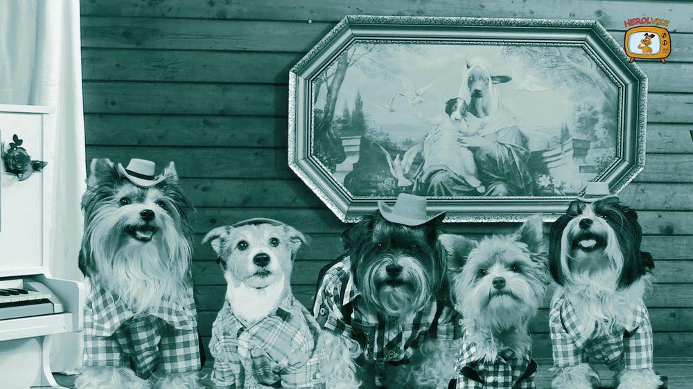 Jak se točí psí film