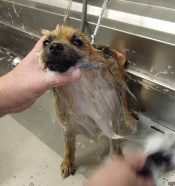 Jak správně koupat psa...