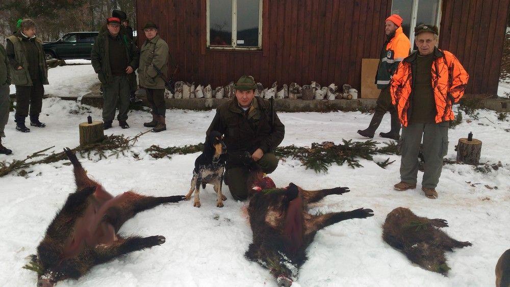 """Skvělé, ale opomíjené plemeno loveckých psů – to jsou """"gaskoňci""""!"""