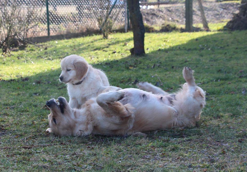 Čím vším může šokovat zájemce o štěně