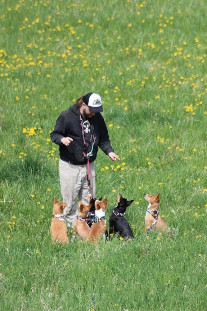 Jeden je prostě málo aneb Basenži pes smečkový!  9d18e983bf