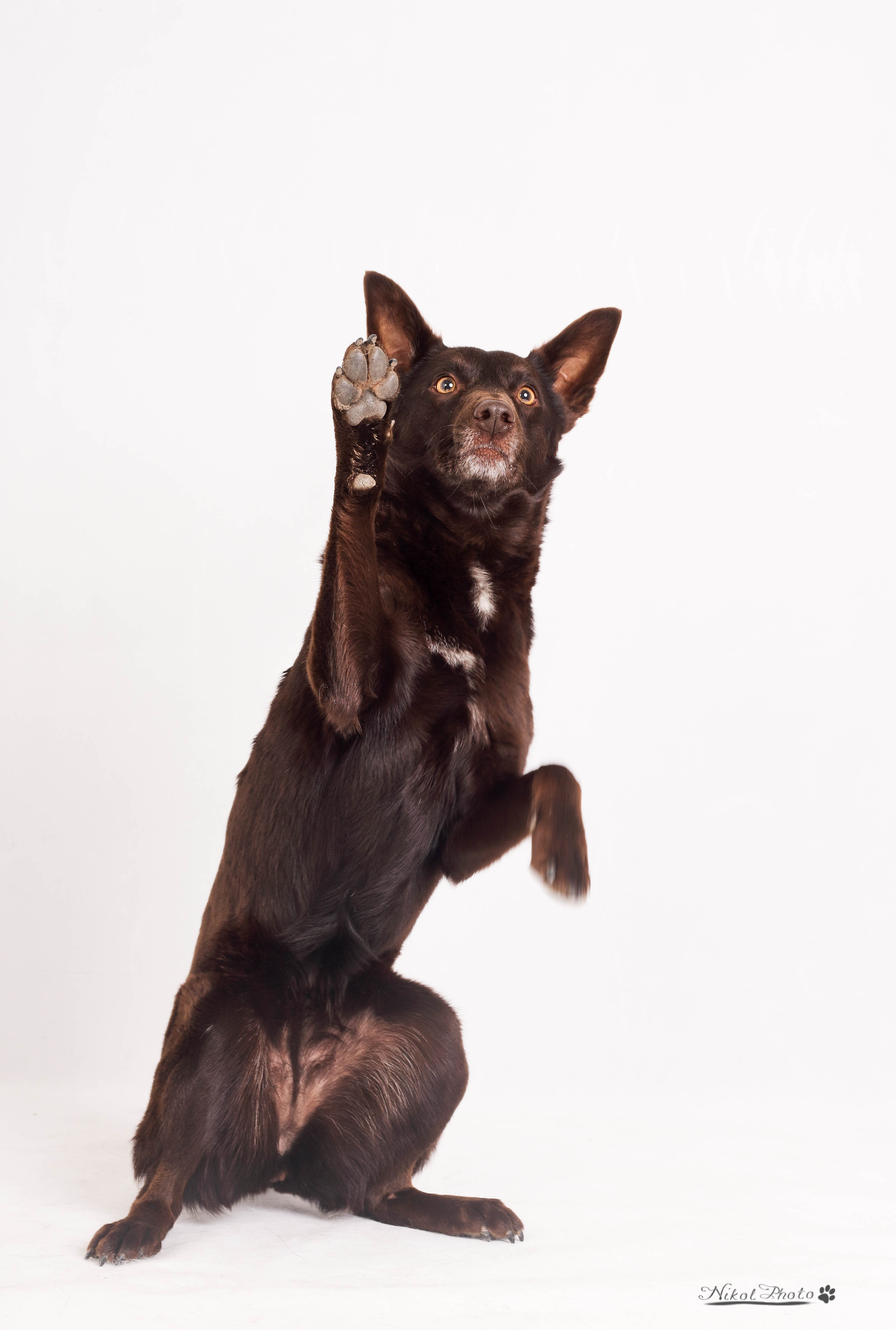 Co dělat, aby nám pes opravdu rozuměl?